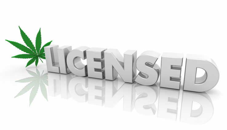 Getting a marijuana vendor license